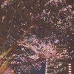 100ワニ完結 桜と共に浮かび上がる人生の鮮やかさ…既にワニロス