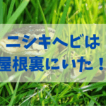 ニシキヘビが発見されたんだって…まさか屋根裏にいたとはねぇ…笑